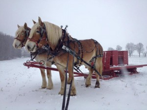 Our couples sleigh if you want to enjoy a private ride.