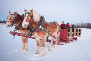 Winter outdoor fun sleigh ride